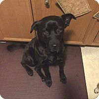 Adopt A Pet :: Jovie - Lancaster, PA