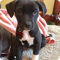 Adopt A Pet :: Sequoia - PENDING - Grafton, WI