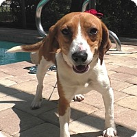 Adopt A Pet :: Trista - Tampa, FL