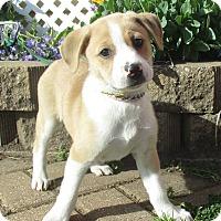 Adopt A Pet :: Tani - West Chicago, IL