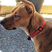 Adopt A Pet :: Axel - Pleasanton, CA