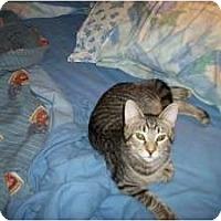 Adopt A Pet :: Jordan - Henderson, KY