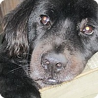 Adopt A Pet :: Sebastian - Stroudsburg, PA