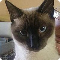 Adopt A Pet :: Snowie - Lantana, FL