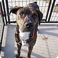 Adopt A Pet :: Chevy - Chewelah, WA