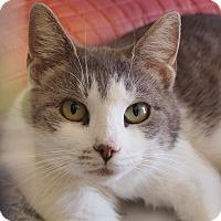 Adopt A Pet :: Willow - Ocean City, NJ
