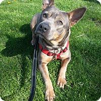 Adopt A Pet :: Jazzy - Cedar Rapids, IA