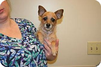 Terrier (Unknown Type, Small) Mix Dog for adoption in Wildomar, California - Sally