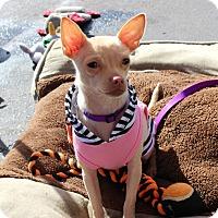 Adopt A Pet :: Pixie - Yuba City, CA