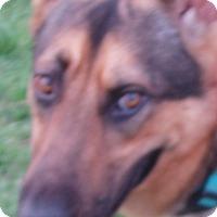 Adopt A Pet :: Rumor - Dripping Springs, TX
