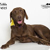 Adopt A Pet :: Zelda - Baton Rouge, LA