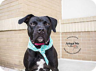 Labrador Retriever/Boxer Mix Dog for adoption in Charlotte, North Carolina - Portia