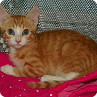 Adopt A Pet :: Peanut - Fort Pierce, FL