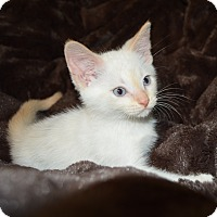 Adopt A Pet :: Mellow - Richmond, VA