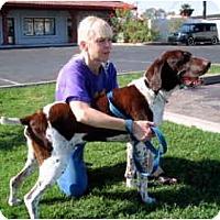 Adopt A Pet :: Maxmillan ADOPTED - Scottsdale, AZ