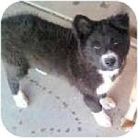 Adopt A Pet :: ROD-JO - Gilbert, AZ