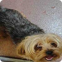 Adopt A Pet :: Boomer - Ogden, UT