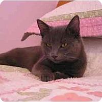 Adopt A Pet :: Sebastian - Arlington, VA
