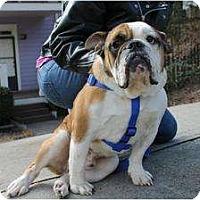 Adopt A Pet :: Wilbur - Winder, GA