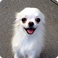 Adopt A Pet :: Niko - Dover, MA