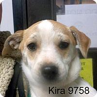 Adopt A Pet :: Kira - Greencastle, NC
