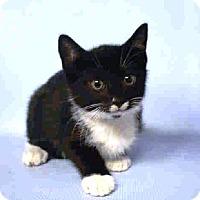 Adopt A Pet :: Jack - Prospect, CT