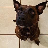 Terrier (Unknown Type, Medium) Mix Dog for adoption in Orlando, Florida - Biscuit