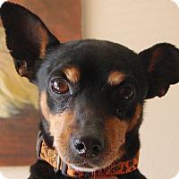 Adopt A Pet :: PERRY - Hurricane, UT