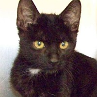 Adopt A Pet :: Onyx - Westville, IN