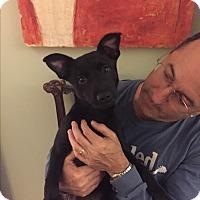 Adopt A Pet :: SKY - HAGGERSTOWN, MD