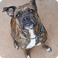 Adopt A Pet :: Billie - Homewood, AL