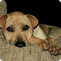Adopt A Pet :: Libby - Sun Valley, CA