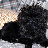 Adopt A Pet :: PAISLEY - ADOPTION PENDING! - Little Rock, AR