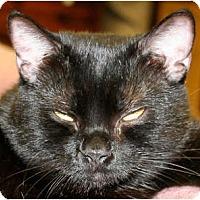 Adopt A Pet :: Wyla - Naples, FL