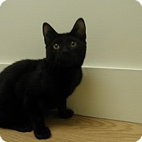 Adopt A Pet :: Murdock - Milwaukee, WI