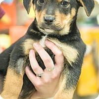 Adopt A Pet :: Titan - Gainesville, FL