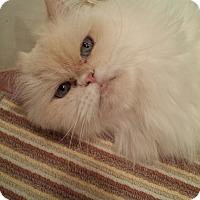Adopt A Pet :: Crystal - Columbus, OH
