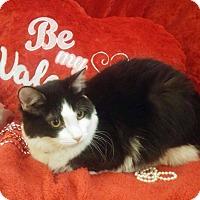 Adopt A Pet :: Mochi - Arlington/Ft Worth, TX