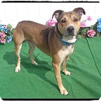 Adopt A Pet :: TATER, video, soccer player - Marietta, GA