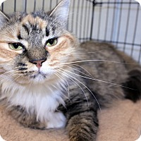 Adopt A Pet :: Sally - Lumberton, NC