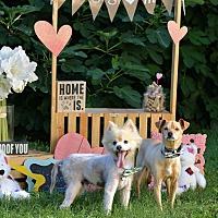 Adopt A Pet :: Teddy and Benji - Va Beach, VA