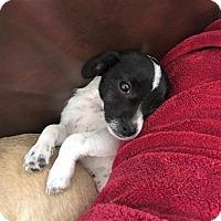 Adopt A Pet :: Weslyn - Oakley, CA