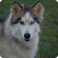 Adopt A Pet :: Kiska - Johnson City, TN