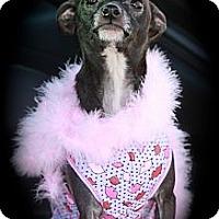 Adopt A Pet :: SAGE - Albany, NY