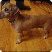 Adopt A Pet :: Skippy 2180 - San Jose, CA