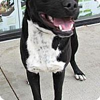 Adopt A Pet :: Bert - Justin, TX