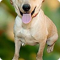 Adopt A Pet :: Ellie fun active pup - Sacramento, CA
