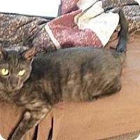Adopt A Pet :: Riddick - Dallas, TX