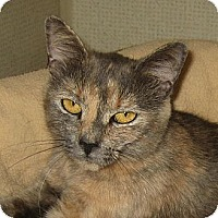 Adopt A Pet :: BELLE - 2013 - Hamilton, NJ