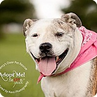 Adopt A Pet :: Edith - Medina, OH